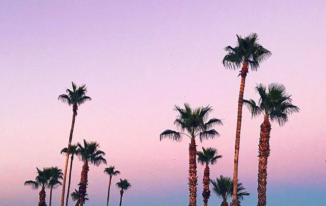 Arizona Palms