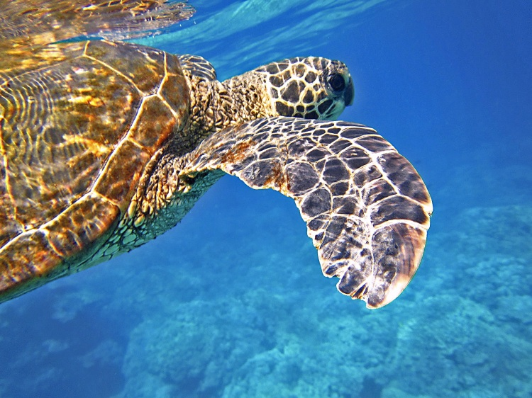 snorkel, swim or dive with the marine life