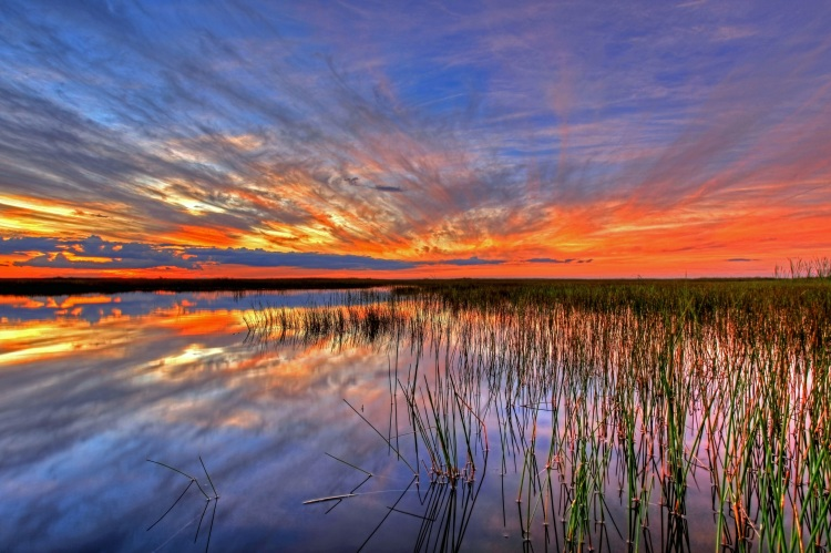 take a day trip to the Everglades